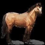 Quarter Horse.Falbe.Altes Design