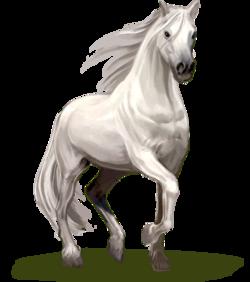 PferdHomebildschirm