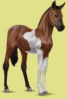 Datei:Paint Horse Fohlen Brauner mit Tobiano-Scheckung Alte Grafik.jpg