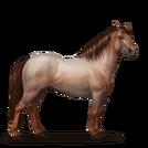 Quarter Pony Strawberry Roan