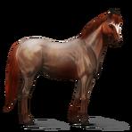 Quarter Horse.Strawberry Roan.Altes Design
