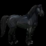 Mustang Rappe Alt