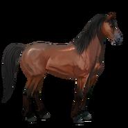 Mustang Rotbrauner Alt