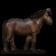 Neufundland Pony.Dunkelbrauner