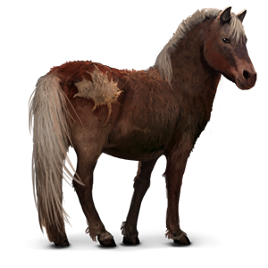 Datei:Sable Island Pony.png