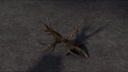 Bucktorn Root