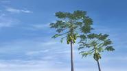 Coconut 11