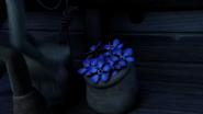Blue Oleander 15
