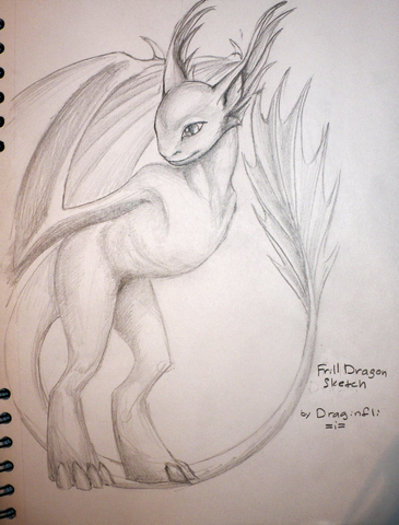 File:Draginfli's Frill Dragon.png