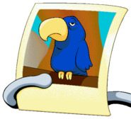 Parrot Picture