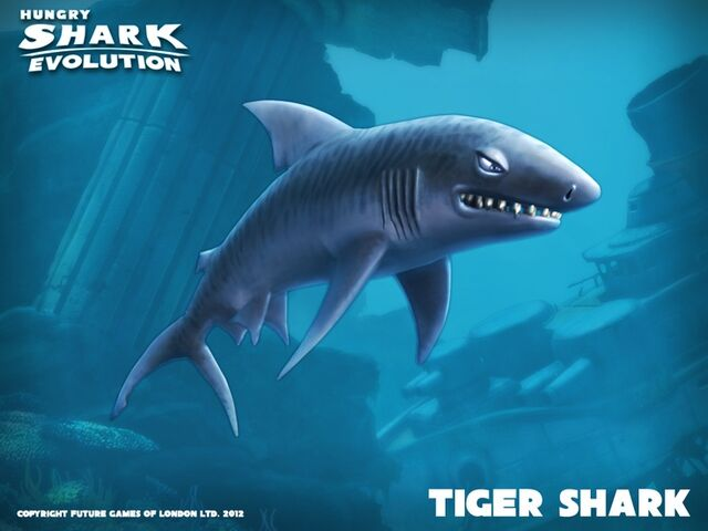 File:Tiger Shark Banner.jpg