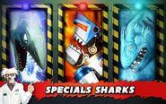 Sharks secret