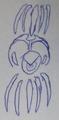 Velenochamp Icon.png