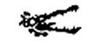 Riverjaw Icon