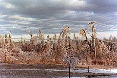 File:Ice Storm 98 trees line Noaa6198.jpg