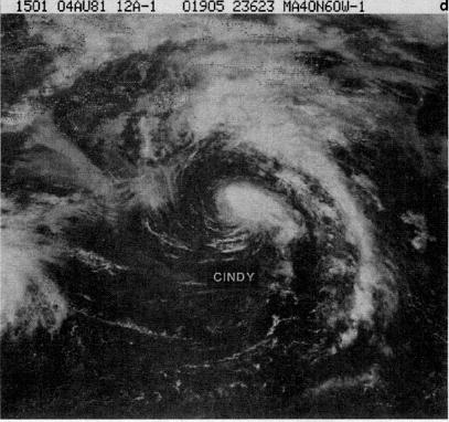 File:Hurricane Cindy (1981).JPG