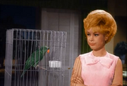 Jeannie turns Tony into parrot