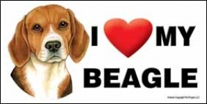 File:Beagle love.jpg