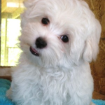 File:Cutepuppy -)))).png