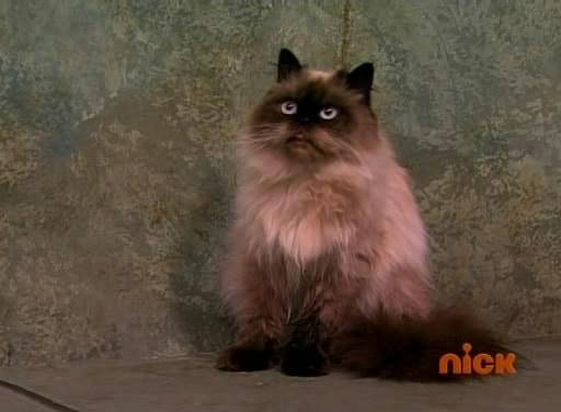 File:Harmoo the cat.jpg