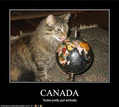 Funny-pictures-cat-likes-how-canada-tastes (1)