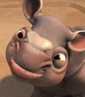 Rhino (7)