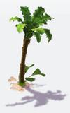 Deco jungle palm