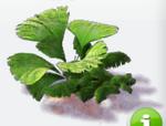 Deco small jungle bush