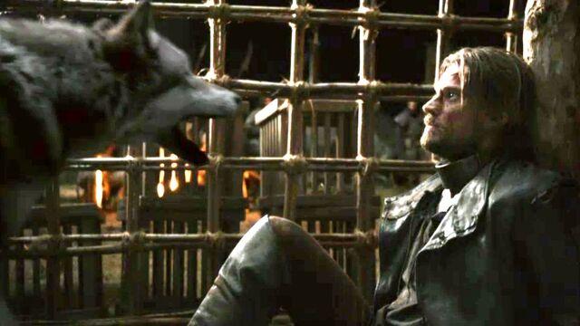 File:Grey-Wind-and-Jaime-Lannister-game-of-thrones-direwolves-29370438-1241-699.jpeg