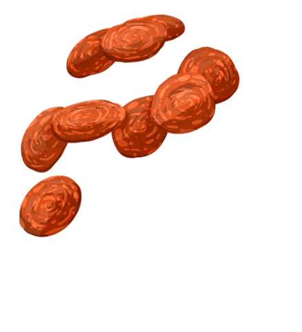 File:Pepperoni.png