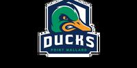 Point Mallard Ducks
