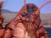 Commander Crayfish
