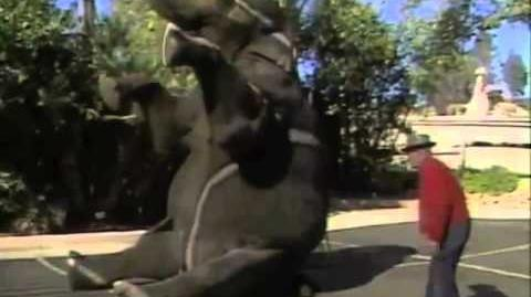 An Elephant Never Forgets Reunited With Trainer After 15 Years