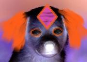 File:Demon puppy.jpg