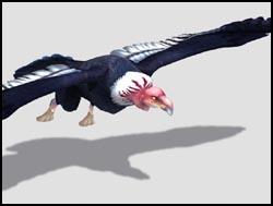File:Condor th.jpg