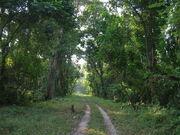 Gorumara Deep Forest Arnab Dutta