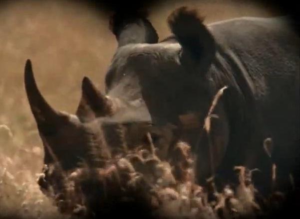 File:Rhino.jpg