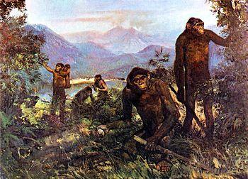 File:Homo erectusjpg.jpg