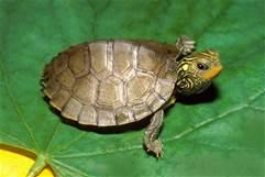 File:I like turtle.jpg