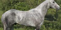 Tornac (horse)