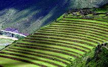 Inca terraces 5