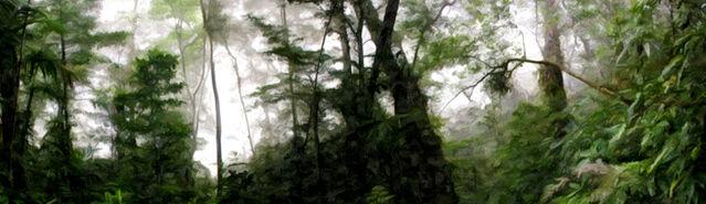 File:Banner---dense-forest2.jpg