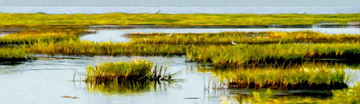 Banner---marsh2