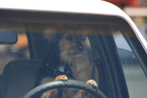 Dog-driving-dat-car