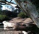Duck Tree