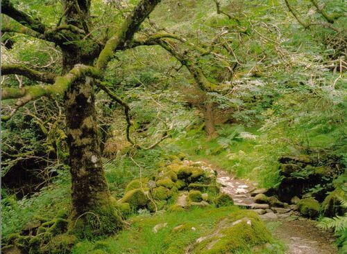 Ravenwood-forest