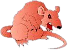 File:Fetcher Rat.png