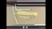 Reiko (fish)