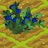 Blue Huckleberry 70