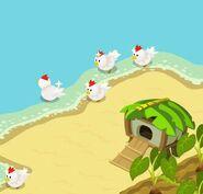 Chicken 02